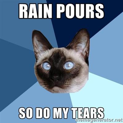 Rain Cat Meme